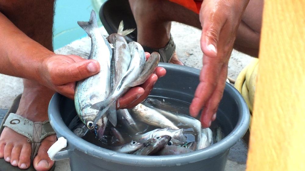 рыба на рыбалке в анапе